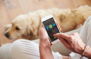 The Benefits of Dog Health Monitors