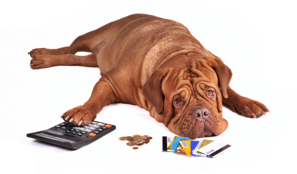 Image result for budget dog