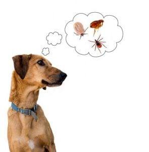 Side effects of dog flea treatments