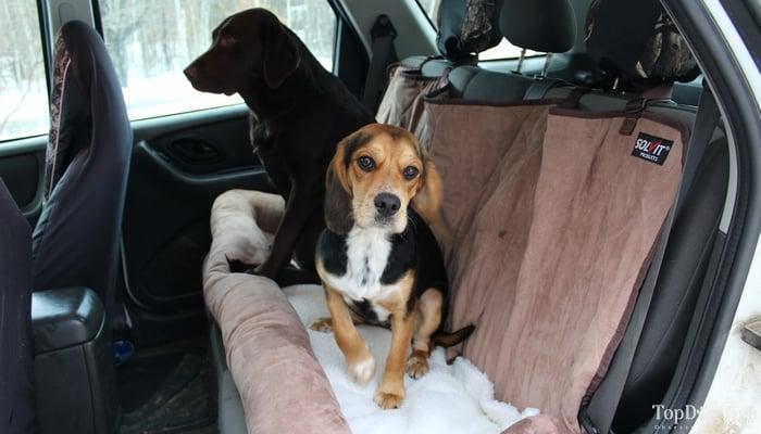 Review Solvit Car Cuddler For Dogs Top Dog Tips