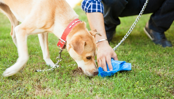 how to train a dog to poop on a leash