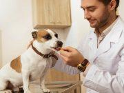vet recommended dog treats