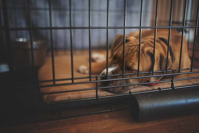 10 Ways to Stop a Dog Pooping in a Crate – Top Dog Tips