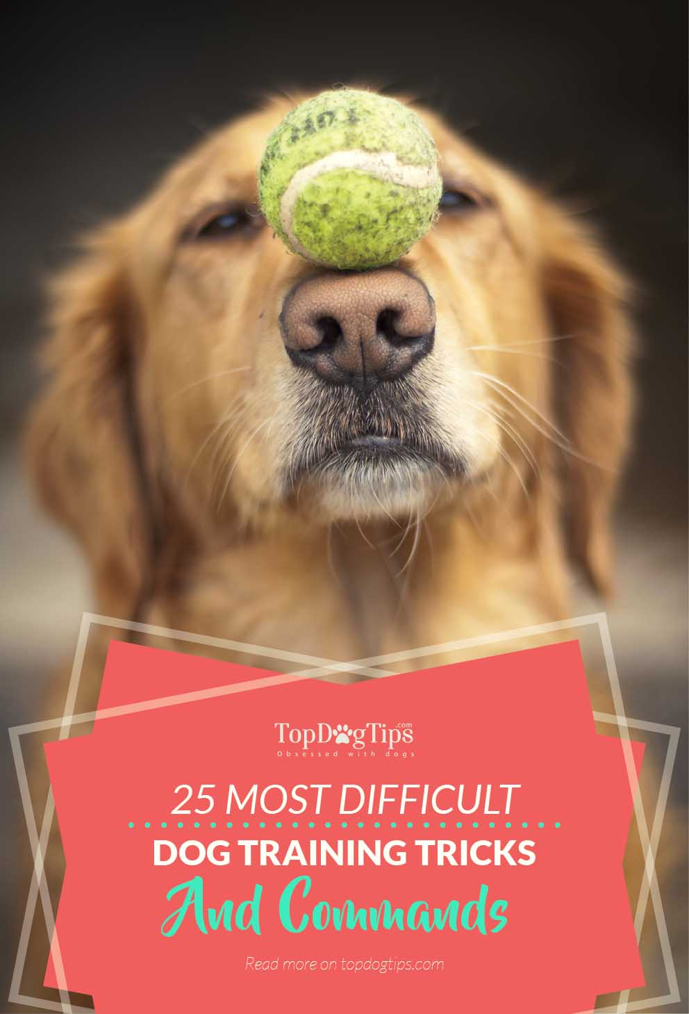 25 Hardest Tricks Commands To Train Dogs From Easiest To Hardest