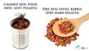 Dry dog food vs Canned dog food