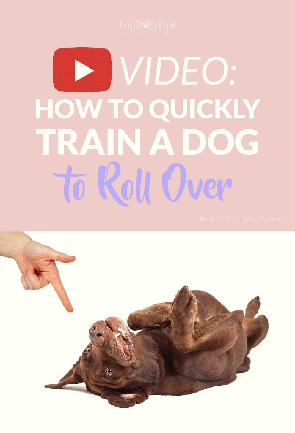 housebreak a dog How to potty train your siberian husky in 5 ½ days how to potty train your siberian husky in 5 ½ days potty training your dog can be a frustrating process if you don't have a firm plan in place.