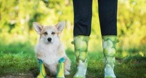 best waterproof dog boots