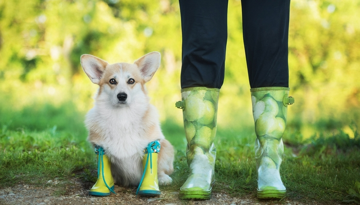 TOP 5  Best Waterproof Boots for Dogs Top booties for walking dogs in rain  or snow. What are ... 7ad0b185978f