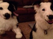 Wish Your Dog Could Have a Twin? Cuddle Clone Can Make That Happen!