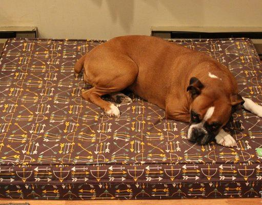 eLuxurySupply Orthopedic Dog Bed Review