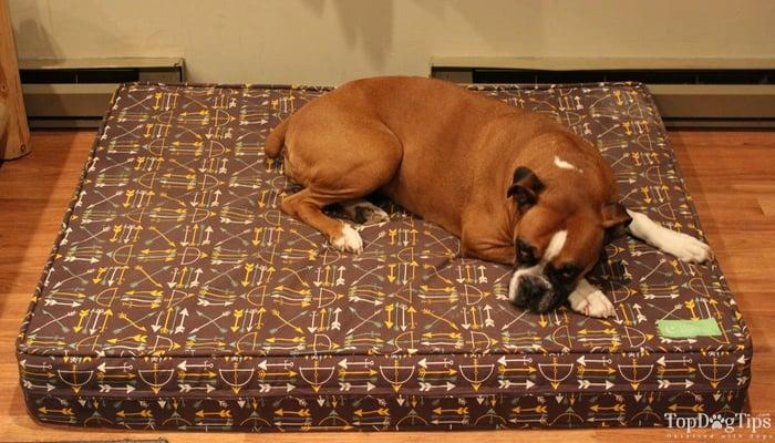 Reviews Of Eluxurysupply Dog Beds