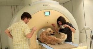 Scientific Studies Prove Dogs Understand Emotions