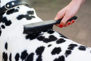 How to Groom a Dog 101 - The Largest Free All-in-One Course for Beginners