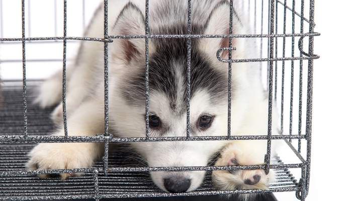 10 Ways to Stop a Dog from Pooping in a Crate