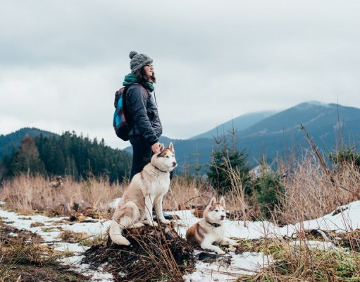 tips and tricks for hiking with your dog