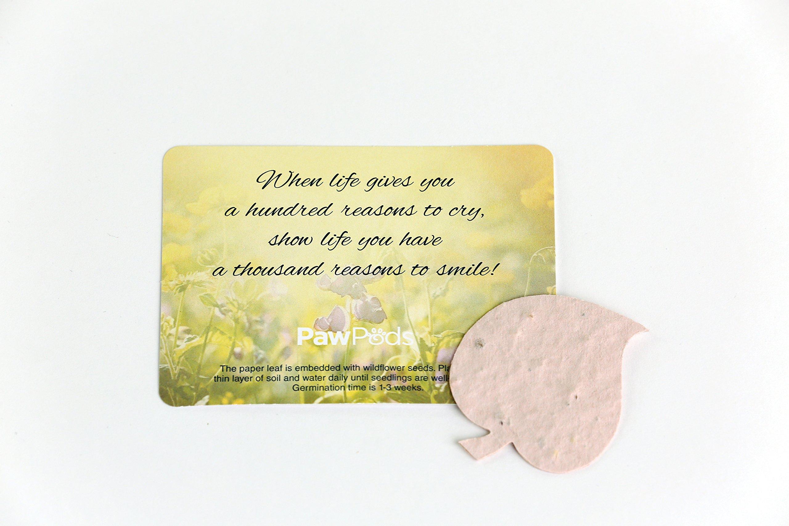 Paw Pod Giveaway