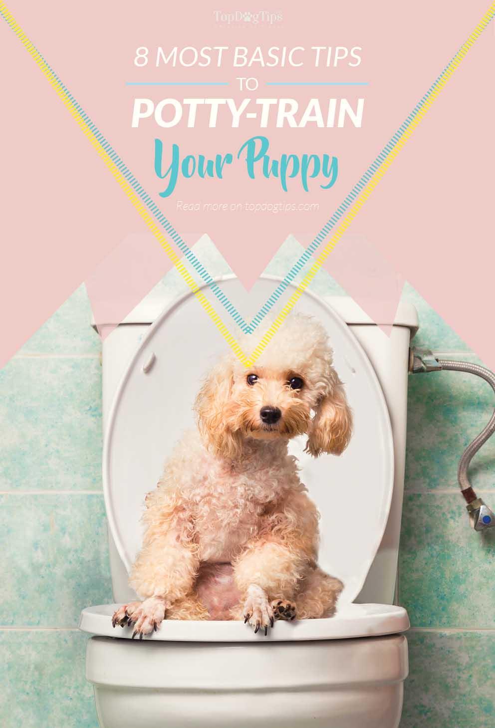 Re Potty Training A Dog