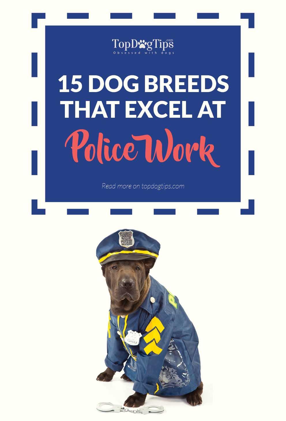 Best Police Dog Breeds for Police Work