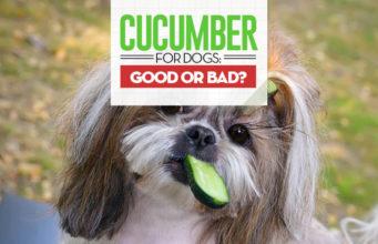 Can I give my dog cucumbers