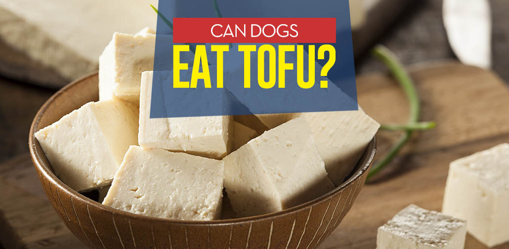 Can I Feed My Dog Tofu