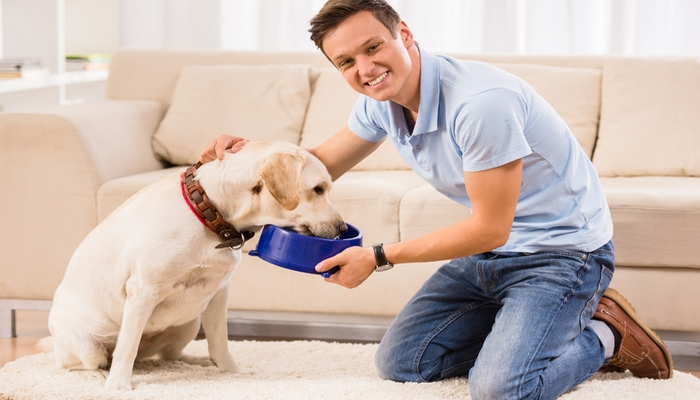 How To Feed Dogs To Deal With and Prevent Allergies