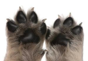 Dog's nail care