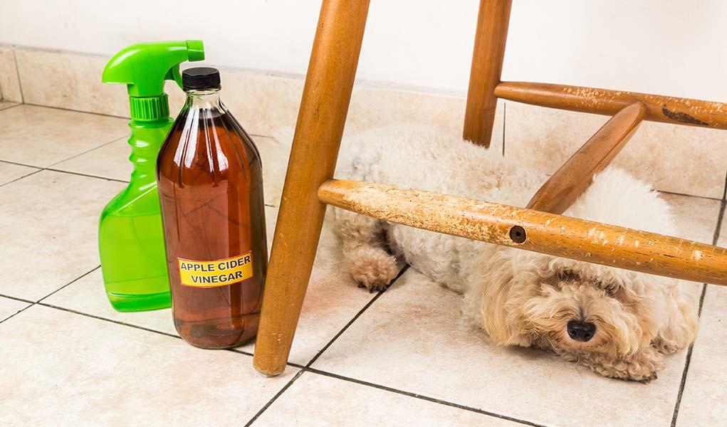 Pet odors in carpet home remedies