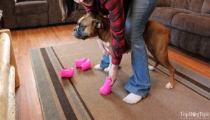how to measure a dog for boots