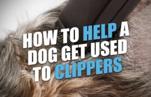 How to Help a Dog Get Used to Pet Clippers