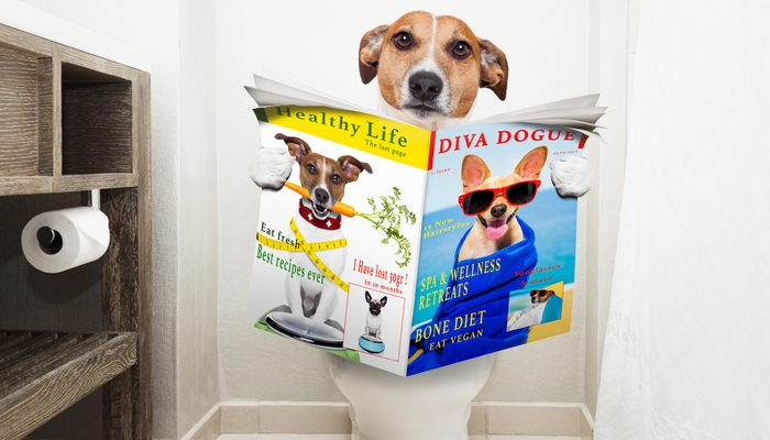 Top 8 Tips for Potty Training a Puppy