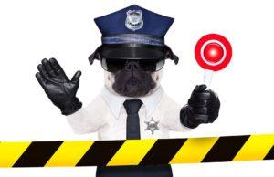 Top Best Dog Breeds for Police Work
