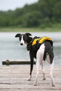 Why dogs need to be in water vests and flotation vests