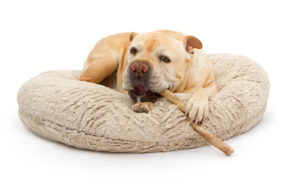 top 7 best dog bully sticks chews in 2017 better than rawhide. Black Bedroom Furniture Sets. Home Design Ideas