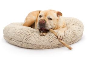 best dog bully sticks