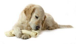 best dog rawhide treats