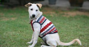 best dog shirts