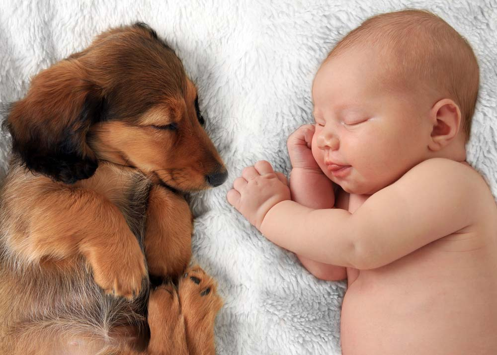 A Study Shows How Dogs May Improve Health Of Young