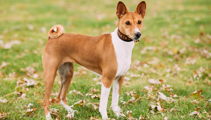 20 Best Short Hair Dog Breeds That Are