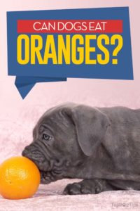 Can Dogs Eat Oranges - 7 Potential Benefits and Side Effects