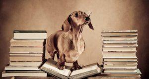 Dog Food Myths and Feeding Myths