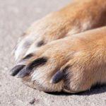Dog nail quick