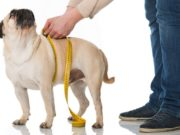 How To Measure A Dog For Clothing
