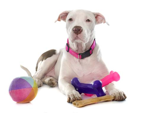 Toy Size Dogs : How to choose the right size dog toys explainer video