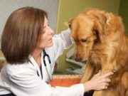 Science Gets a Step Closer to Curing a Rare Disease in Dogs