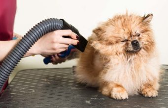 Top 10 Best Pet Dryers for Dogs