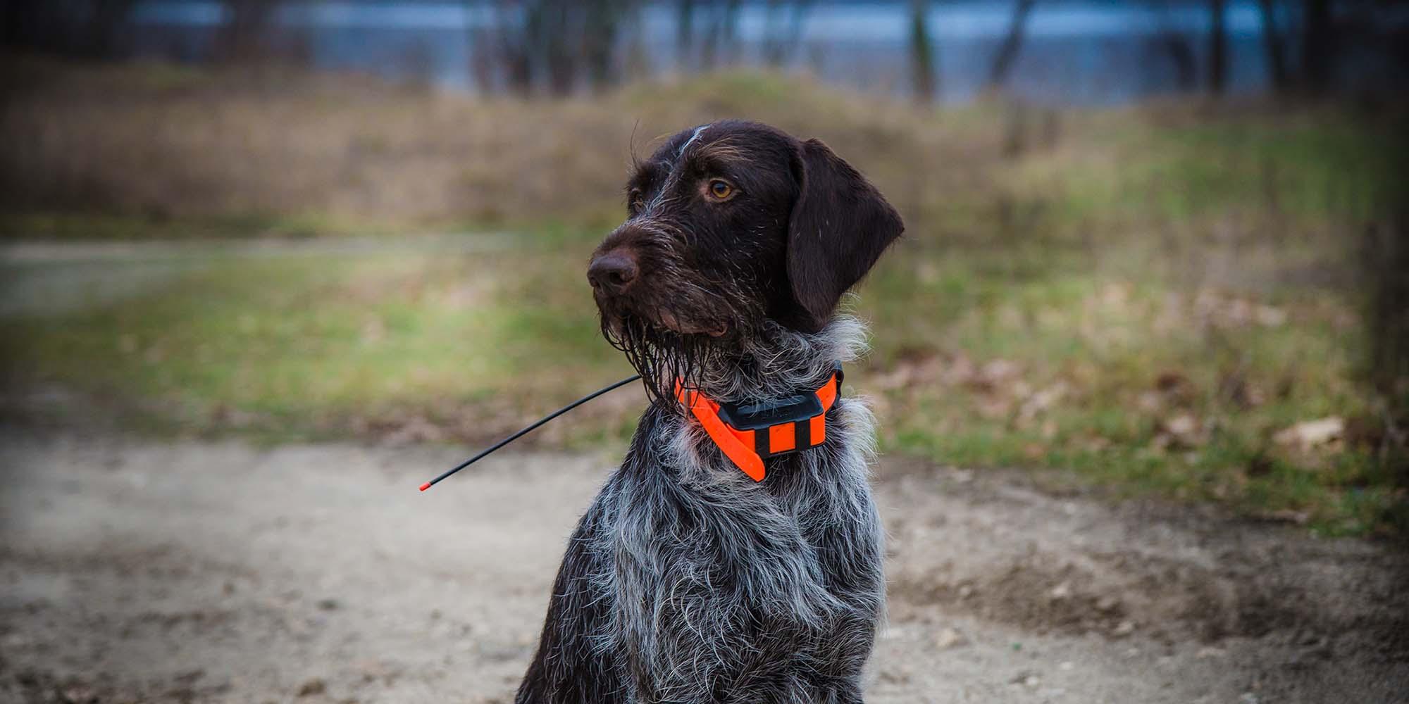 Dog Collar Tech Code