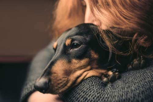 Use Physical Contact for Help Dog Anxiety