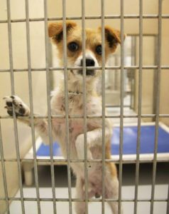 Visit Your Nearest Dog Shelter Facility First