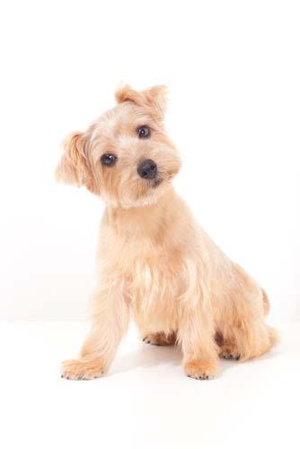 Dog Foods Similar To Orijen