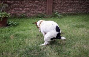 best dog diarrhea solutions